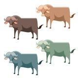Set of buffalo Stock Images