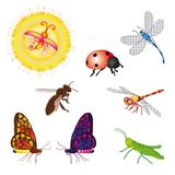Set of bugs. Set of colorful bee, butterfly, grasshopper, ladybird, dragon-fly and firefly Vector Illustration