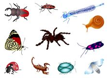 Set of bugs. Set of colorful stag beetle, beetle, moth, dragon-fly, butterfly, ladybird, Scorpio, spider and snail Stock Photos