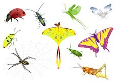 Set of bugs. Set from ten bright insects Royalty Free Stock Photos