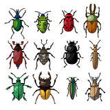 A set of bugs. Print design on fabric, paper, ceramics Royalty Free Stock Images