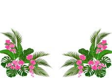 Set, bukiet Naro?nikowy rysunek Zieleni tropikalni li?cie banan, koks, monstera i ogawa, R??owa orchidea ilustracja ilustracji