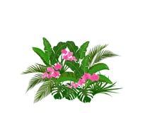 Set, bukiet Zieleni tropikalni li?cie banan, koks, monstera i ogawa, R??owa orchidea ilustracja ilustracji