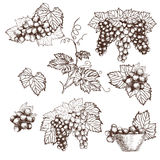 Set of Bunch grapes sketch style vector illustration. Old engraving imitation. Hand drawn Royalty Free Stock Images