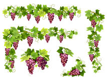 Set of bunches red grapes Royalty Free Stock Images