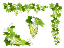 A set of bunches of white grapes. Royalty Free Stock Images