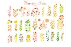 Set bunte Herbstblätter Auch im corel abgehobenen Betrag Vektorsatz des roten Herbstaquarells verlässt und Beeren, Hand gezeichne Lizenzfreies Stockbild