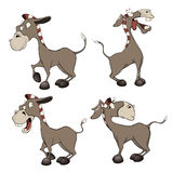 A set of burros cartoon Stock Images