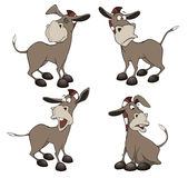Set of burros cartoon Stock Image