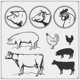 Set of butchery labels and emblems: chicken, pork and beef. Vintage style. Illustration of cow, hen and pig. Black and white Stock Image