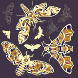 Set of butterflies. Set of beautiful butterflies on color background Royalty Free Stock Images