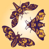Set of butterflies. Set of beautiful butterflies on color background Stock Images