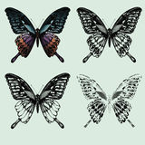 Set of butterflies. hand-drawing. Vector illustration. Stock Photos