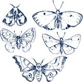 Set of butterflies Stock Photography