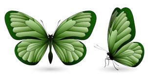 Set of butterflies isolated on white background. Set of green butterflies isolated on a white background. Realistic 3D illustration Royalty Free Stock Image