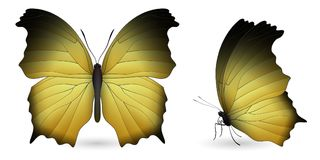 Set of butterflies isolated on white background. Set of yellow butterflies isolated on a white background. Salamis or mother of pearls butterfly. Realistic 3D stock illustration
