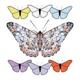 Set of butterflies isolated on white background. Stock Photo