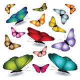 Set of butterflies. Royalty Free Stock Image