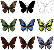Set of butterflies. Silhouette, outline and painted. stock photos