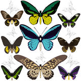 Set of butterflies Stock Images