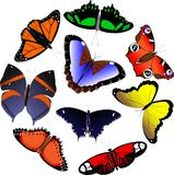 Set of butterflies vector illustration