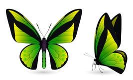 Set of butterflies on white background. Set of green butterflies on a white background. Realistic 3D illustration stock illustration