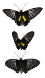 Set with a butterfly Stock Photography