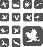 Set buttons - 27_Z. Birds Stock Photo