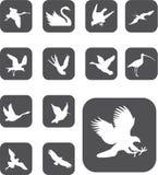 Set Buttons - 27_Z. Birds Stock Photo