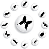 Set Buttons - 37_B. Insects Stock Photography