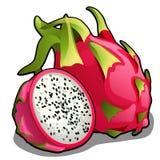 Set cały i połówka dojrzała pitahaya owoc lub Hylocereus undatus, smok owoc Element zdrowa dieta deliciouses royalty ilustracja