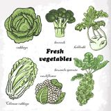 Set of cabbages - cauliflower, Chinese cabbage, broccoli, Brussels sprouts, kohlrabi Stock Photo