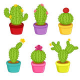 Set of cacti in pots Royalty Free Stock Photography