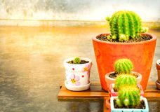 Set of cactus and beautiful  light. Royalty Free Stock Photo