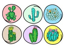 A Set of Cactus and Cactus Flowers Royalty Free Stock Photo