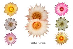 Set of cactus flowers stock images