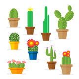 Set of cactus in a pot. Domestic plant with flowers for the decoration of the room. Vector, illustration isolated  Royalty Free Stock Photo