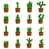 Set of cactus in pots, vector illustration Stock Photos
