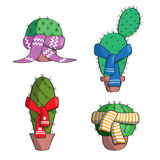 Set the cactus in the scarves. Royalty Free Stock Images