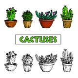 Set of Cactus and succulent plants in flower pots. With spines or flowers and without. Botanical vector illustration, tee shirt graphics, typography vector illustration