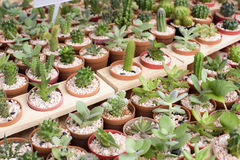 Set cactus Stock Photo