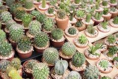 Set cactus Stock Images