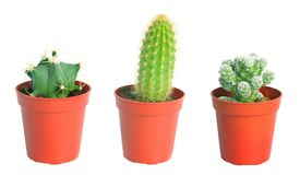 Set cactus, succulent plants in pot, isolated on white. Interior gardening decor Stock Images
