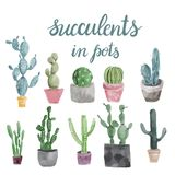 Set of cactus and succulents isolated on white background. Stock Photography