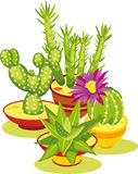 Set of Cactuses Stock Photography