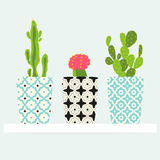 Set of cactuses pattern in pot. Stock Photo