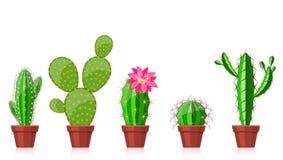 Set of cactuses Stock Photo