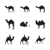 Set of Camel Silhouette Royalty Free Stock Photography