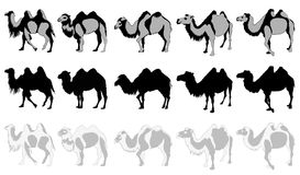 Set of Camels. On a white background vector Illustration Royalty Free Stock Image