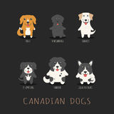 Set of canadian dogs Stock Photo